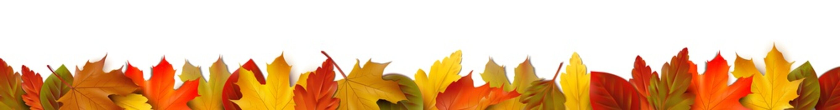 Bunte Herbstblätter - Bordüre Banner