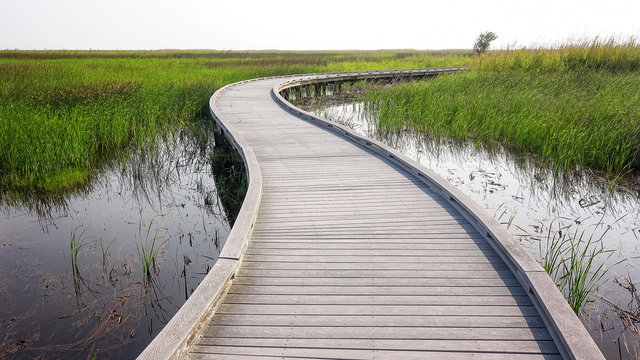 Boardwalk Through Marsh in Sabine National Wildlife Refuge in Louisiana