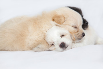 puppies are playing and sleeping together on the white fabric backdrop in studio