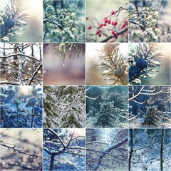 Winter collage