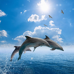 Fotobehang Dolfijn Dolphins jumping out of blue sea, seagulls fly high in blue sky