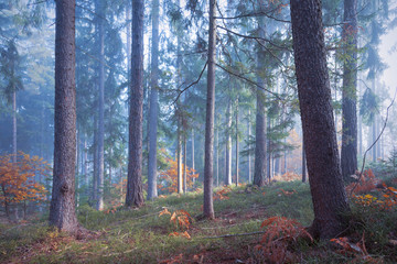 Wall Mural - Fantasy fall season foggy forest landscape with morning sunlight.