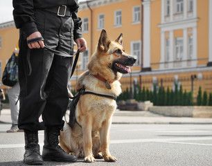 Smart police dog sitting outdoors