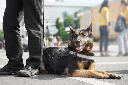 Smart police dog outdoors