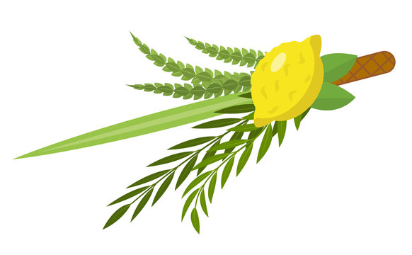 Sukkot set of herbs and spices of the etrog, lulav, Arava, Hadas. Isolated on white background. Vector illustration