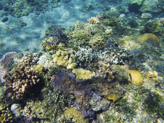 Tropical seashore underwater landscape. Coral reef colorful view. Coral reef underwater photo.