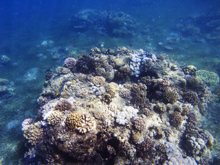 Tropical seashore underwater landscape. Coral reef in blue sea water.