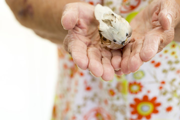 Woman's Hand Holding Birds