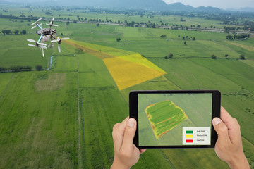 Wall Mural - drone for agriculture, smart farmer use drone for various fields like research analysis, terrain scanning technology, monitoring soil hydration, yield problem, take photo and send data to the cloud