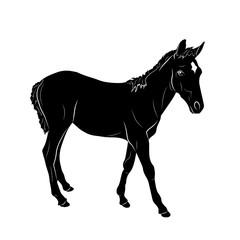 Векторный рисунок чёрный силуэт лошади