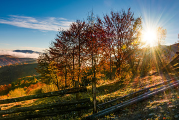 red forest on hillside behind the fence at sunrise. gorgeous mountainous countryside landscape in autumn