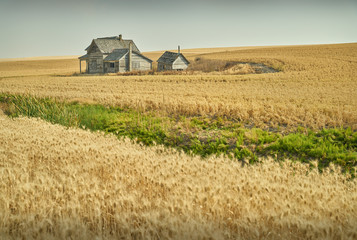 Abandoned Farm Buildings. Abandoned buildings dot the landscape in the Palouse area of Washington State, USA.