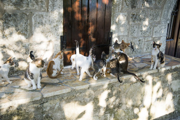Greek cats from Lefkada island. The feline friends are all over Greece just waiting to snap up a tid-bit under the taverna table or find a shady spot to snooze all day...its a cat's life...