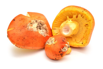 mushroom food