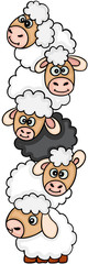 Cute sheep stack