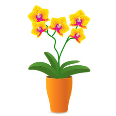 Vector illustration of a yellow orchid flower in a flowerpot