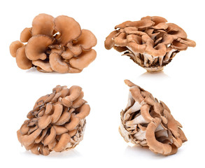 maitake mushrooms on white background