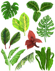 Colorful set of tropical leaves