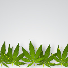 Cannabis background. Leaves of marijuana on a light background