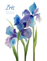 Vintage hand made watercolor vector flower. Iris. Romantic illustration. Wedding background. Natural design logo for flowers shop. Wedding invitation card