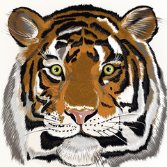 Illustration with hand drawn tiger