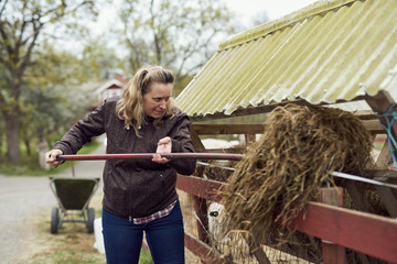Female farmer putting hay in stable with pitchfork
