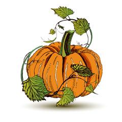 Hand drawn doodle pumpkin.