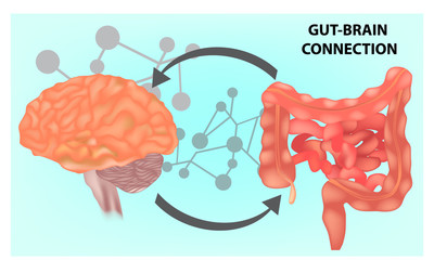 Vector illustration- Gut - Brain connection.