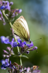 butterfly sitting on a purple flower