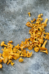 Heap of fresh uncooked forest mushrooms chanterelle over gray texture background. Top view with space