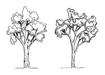 trees vector isolated. hand drawings