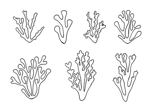 algae outlined set vector isolated. hand drawings