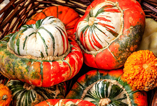 "Big and beautiful ""Turks Turban"" Squashes"