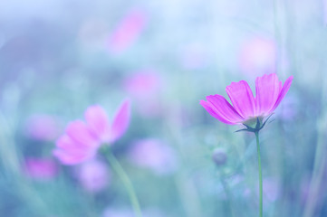 Delicate purple flowers on a blue blurred background. Soft selective focus