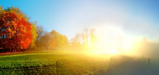Bäume im Herbst - Sonnenuntergang