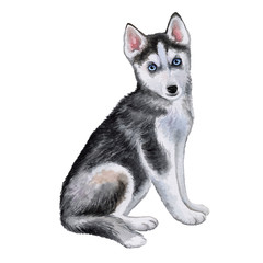 Husky dog puppy isolated on white background. Watercolor. Illustration. Template. A dog with blue eyes. Image. Picture.