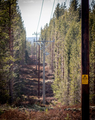 powerlines in the forest