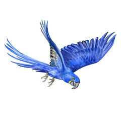 Hyacinth macaw isolated on white background. A flying parrot. Watercolor. Illustration. Handmade. Design. Textiles, books, webdesign