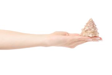 Female hand holding seashells oceans
