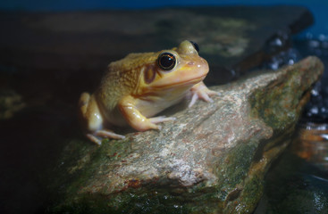 yellow frog on a rock water pond river environment amphibian