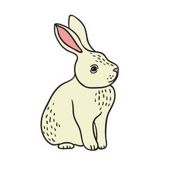 Little White Rabbit Vector Illustration