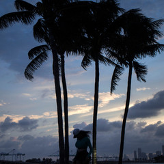 A woman walks past palm trees ahead of the arrival of Hurricane Irma in Miami Beach, Florida