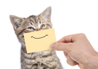 Papier Peint - funny happy young cat portrait with smile on yellow cardboard isolated on white