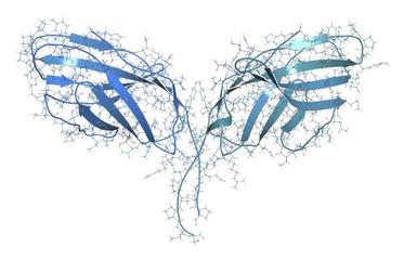 Immune checkpoint protein molecule, illustration