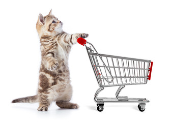 Papier Peint - Funny cat with shopping cart side view