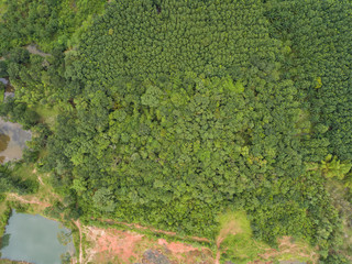 Aerial view of rubber plantations.