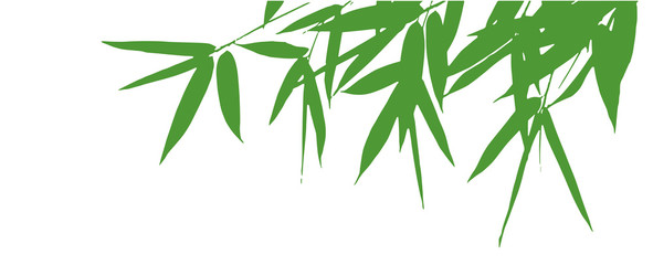 bamboo leaves silhouette