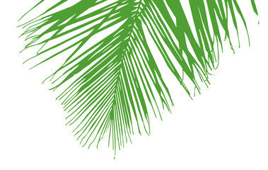 palm tree's leaves silhouette