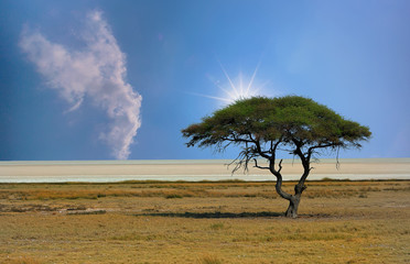Etosha Pan with a solitary Acacia Tree with the sun peeping over the top, Namibia