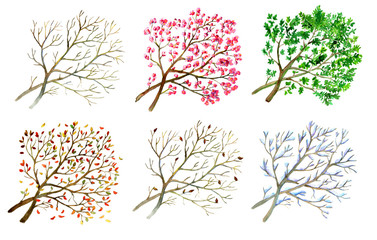 Collection with tree in different seasons - winter, spring, summer and fall on white